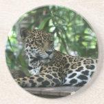 La Florida Jaguar que mira detrás que se acuesta Posavasos Cerveza