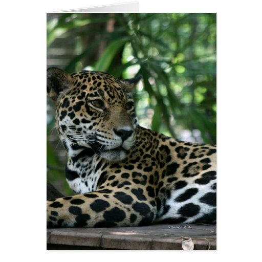 La Florida Jaguar que mira detrás que se acuesta Tarjeta De Felicitación