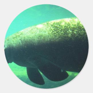 (la Florida) Manatee-subacuático al oeste indio Pegatina Redonda