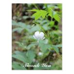 La foto blanca de la flor del corazón le agradece tarjeta postal