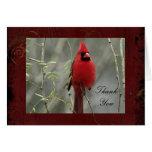La foto cardinal magnífica le agradece tarjeta de
