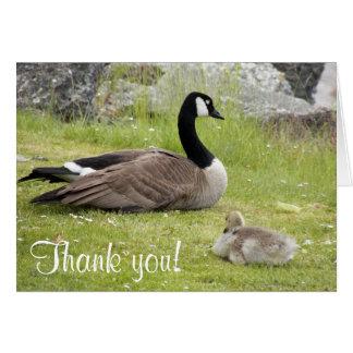 La foto del ganso del bebé le agradece tarjeta de