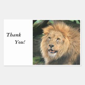 La foto hermosa masculina principal del león le ag