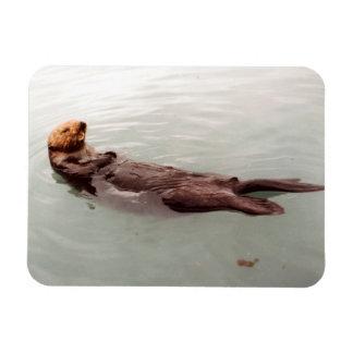 La foto linda de la nutria de mar de Alaska diseñó Iman