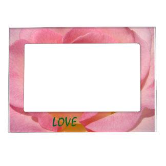 La foto magnética de la flor color de rosa rosada  marcos magnéticos de fotos