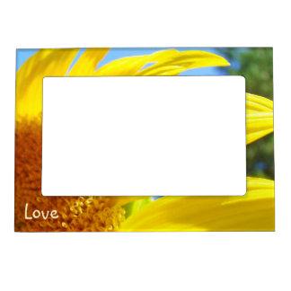 La foto magnética del amor enmarca el girasol del  marcos magneticos para fotos