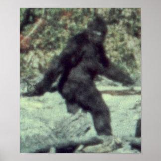 LA FOTO ORIGINAL 1967 DE BIGFOOT SASQUATCH POSTER