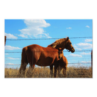 La foto que espera   del caballo fotografía