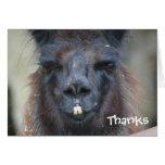 La fotografía animal de la llama negra le agradece felicitaciones