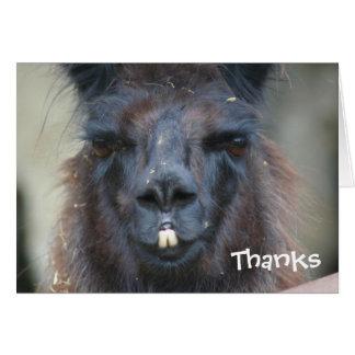 La fotografía animal de la llama negra le agradece tarjeta pequeña