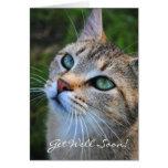 La fotografía del gato de Tabby consigue pronto la Felicitacion