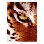 La fotografía del ojo del tigre postal