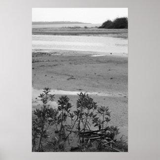 La fotografía negra y blanca del árbol del mangle  póster