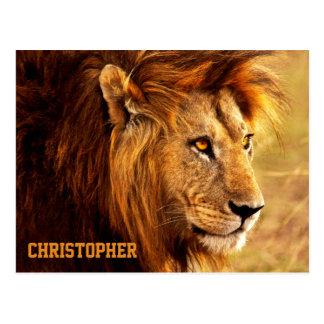 La fotografía noble del león tarjetas postales