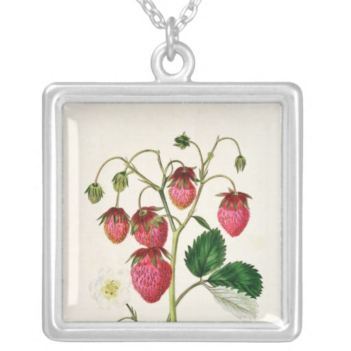 La fresa de Roseberry, grabada por Watte Colgante Cuadrado