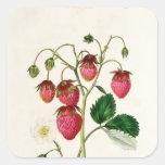 La fresa de Roseberry, grabada por Watte Pegatina Cuadrada