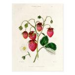 La fresa de Roseberry, grabada por Watte Postal
