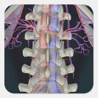 La fuente de sangre de vértebras lumbares calcomanía cuadradas personalizadas