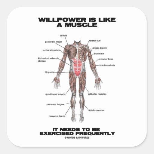 La fuerza de voluntad es como un músculo necesita pegatina cuadrada