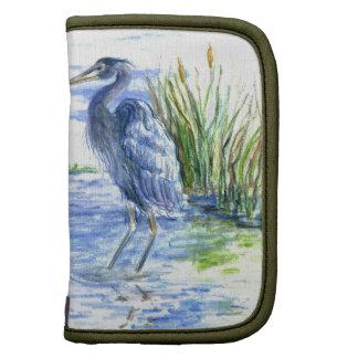 La garza de gran azul vadea en el pantano organizador