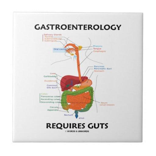 La gastroenterología requiere la tripa (el sistema teja cerámica