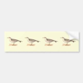 La gaviota americana común(zonorhyncus del Larus) Etiqueta De Parachoque