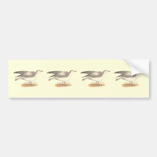 La gaviota del invierno(argentatus del Larus) Pegatina De Parachoque
