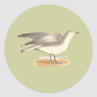 La gaviota del invierno(argentatus del Larus) Etiqueta Redonda