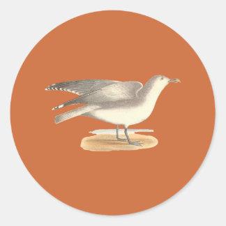 La gaviota del invierno(argentatus del Larus) Etiquetas Redondas
