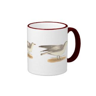 La gaviota del invierno(argentatus del Larus) Taza De Café
