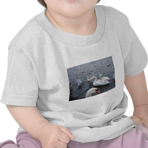 La gaviota en los cisnes apoya camisetas