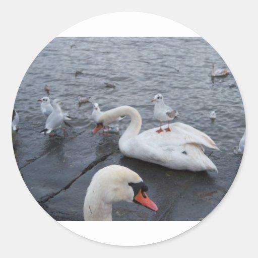 La gaviota en los cisnes apoya etiquetas