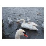 La gaviota en los cisnes apoya invitaciones personalizada