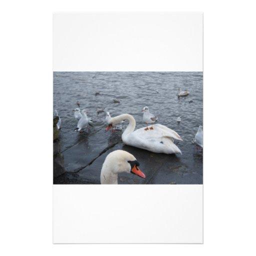 La gaviota en los cisnes apoya papeleria de diseño