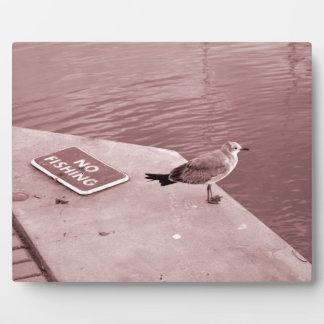 la gaviota ningún canto de la pesca leyó sepia placas con fotos