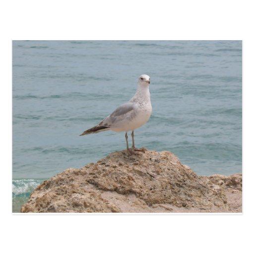 La gaviota solitaria (2134) postales