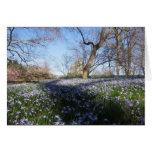 La gloria de la primavera--Tarjeta