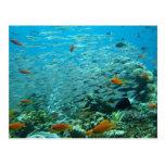 La gran barrera coralina en Australia Tarjeta Postal
