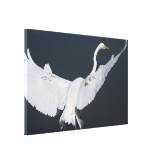 La gran fotografía del Egret envolvió la impresión Impresiones De Lienzo