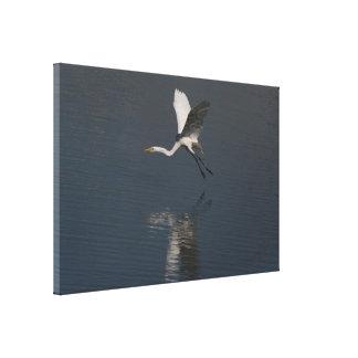 La gran fotografía del Egret envolvió la impresión Lienzo Envuelto Para Galerías