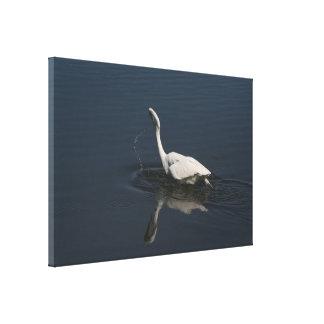 La gran fotografía del Egret envolvió la impresión Lona Envuelta Para Galerías
