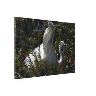 La gran fotografía del Egret envolvió la impresión Impresión En Lona Estirada