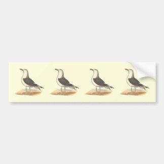 La gran gaviota de espalda negra(Larus Marinus) Etiqueta De Parachoque