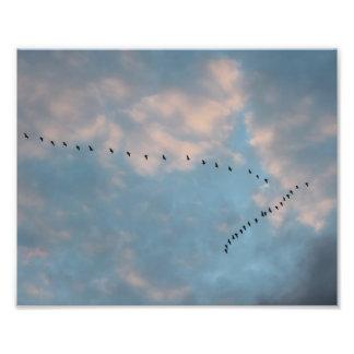 La gran migración de la caída - gansos fotografías