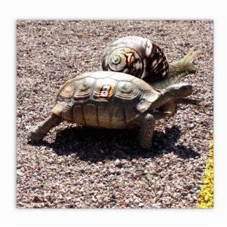 La gran raza de la tortuga y del caracol fotoescultura vertical
