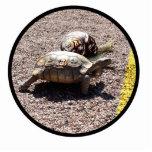 La gran raza de la tortuga y del caracol esculturas fotograficas