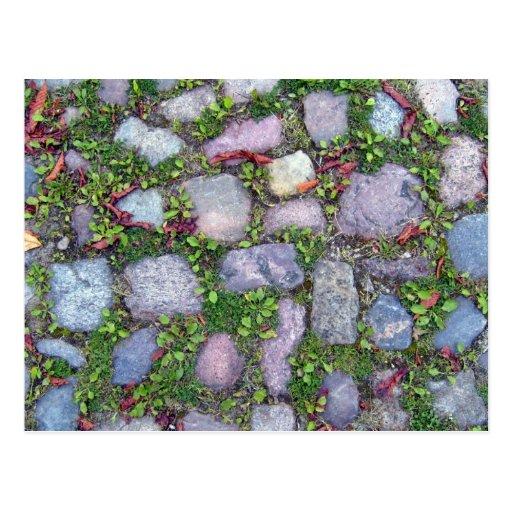La hierba crece con la pavimentación de la calzada postales
