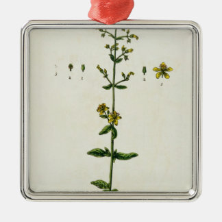 """La hierba de San Juan, platea 15 """"de un herbario c Ornamento De Navidad"""