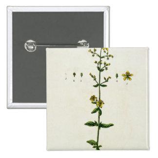 """La hierba de San Juan, platea 15 """"de un herbario c Pins"""