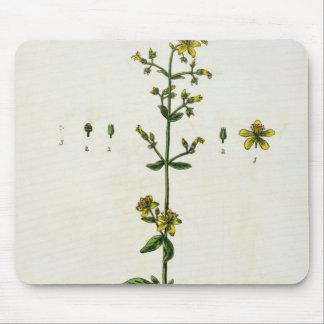 """La hierba de San Juan, platea 15 """"de un herbario c Tapetes De Raton"""